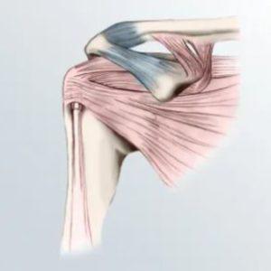 Group logo of Shoulder arthroplasty